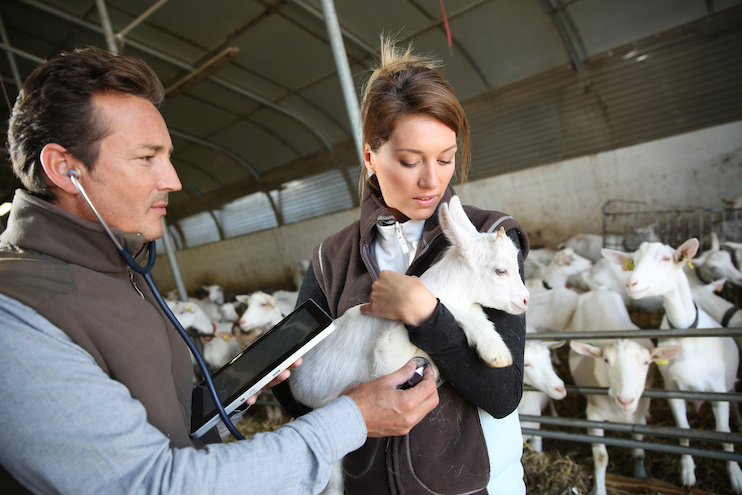 Veterinary Feed Directive